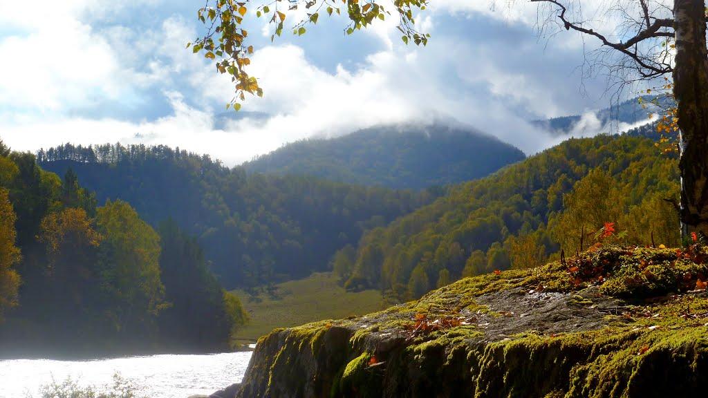 река чарыш алтайский край фото сможете очень точно